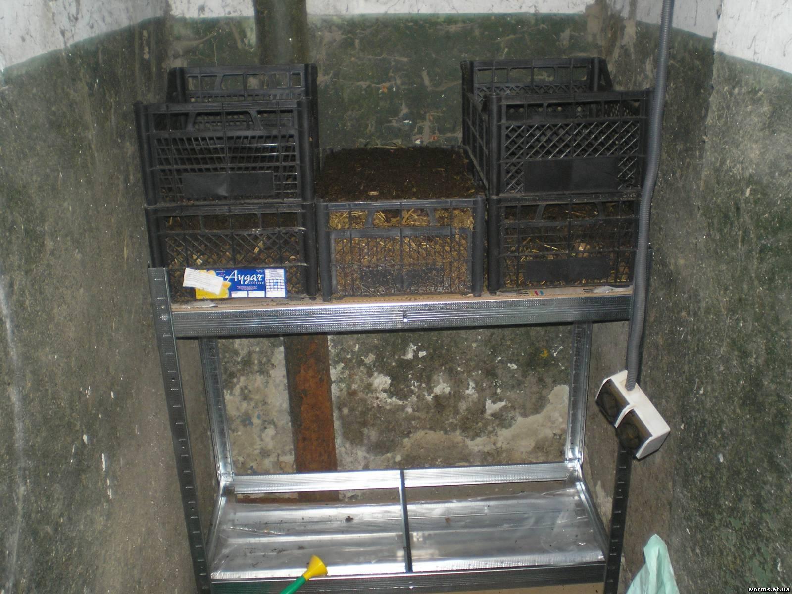 Содержания червей в домашних условиях